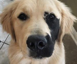 dog, animal, and sweet image