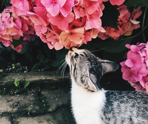 cat, cats, and flowers image