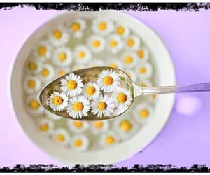 flowers, daisy, and food image