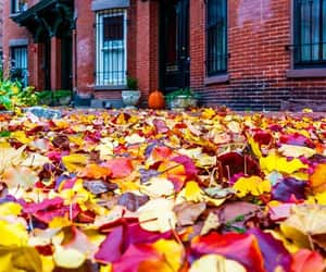 boston, leaves, and pumpkins image