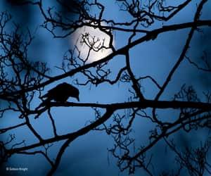 bird, crow, and moon image