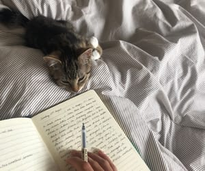 animal, atmosphere, and bed image