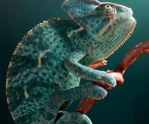 Animales, naturaleza, and camaleon image