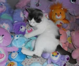 cat, cute, and pastel image