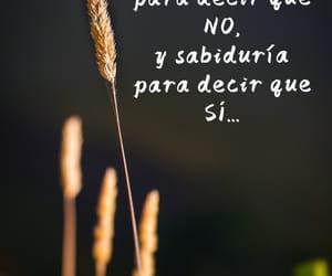 no, SI, and vida image