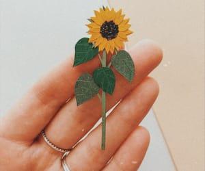 flor, 🌻, and flower image