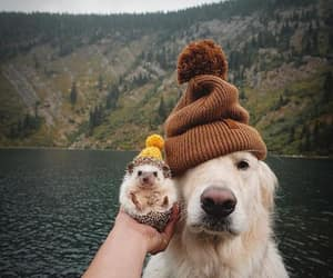 dog, animal, and hedgehog image