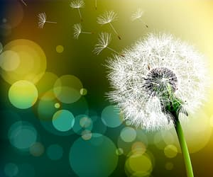 dandelion, wish, and flowers image