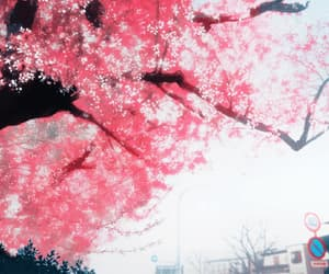 aesthetic, flowers, and sakura image