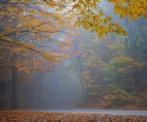 autumn, beauty, and forest image