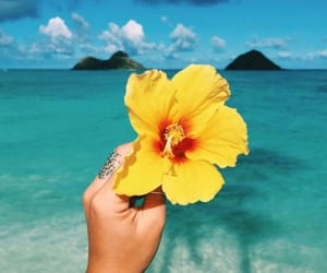 aesthetics, beach, and flower image