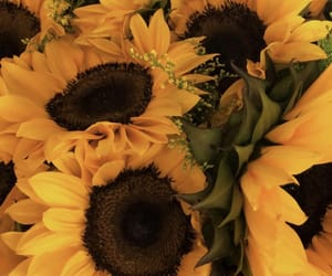 flowers, summer, and yellow flowers image