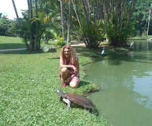 animal, beauty, and brazil image