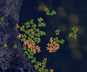 clover, zen, and nature image
