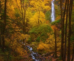 forest, landscape photography, and oregon image