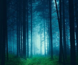 aesthetic, forest, and natural image