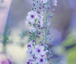 flowers, beautiful, and delicacy image