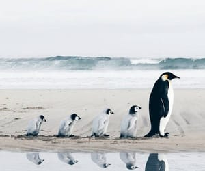 penguin, animals, and nature image