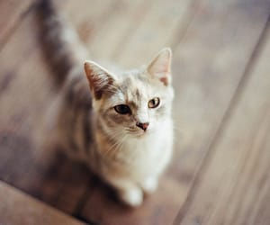 cat, lovley, and قطّ image