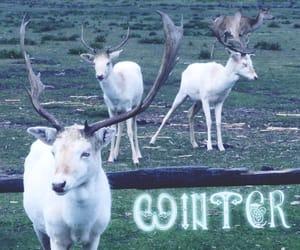 antlers, deer, and snow image