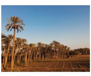 Algeria, beauty, and photography image