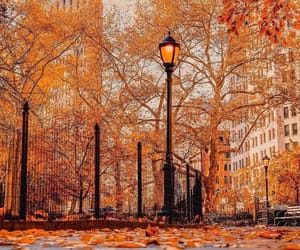 autumn, buildings, and foliage image