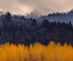 autumn colors, fog, and forest image