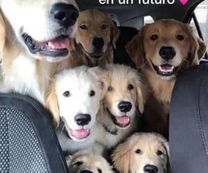 Animales, perros, and memes image