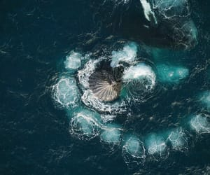 aerial view, animals, and whales image