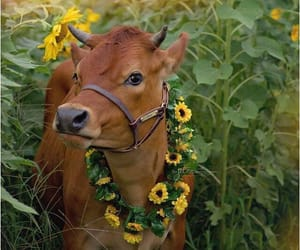animals, cow, and flowers image