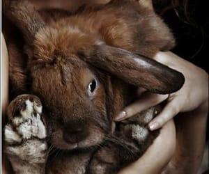 animal, girl with rabbit, and beautiful image