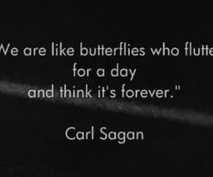 quotes, butterfly, and life image