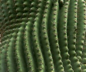 theme, cactus, and green image