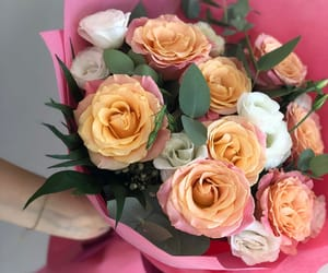 beauty, flowers, and rosses image