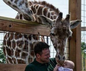 baby, zoo, and zebra image