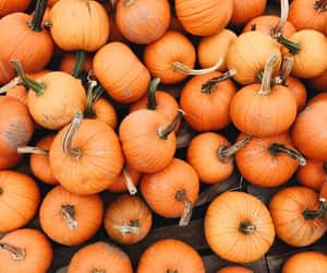 article, orange, and pumpkin image