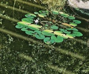 eau, nature, and lové image