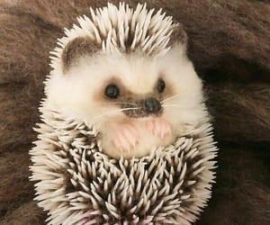 adorable, hedgehog, and animal image