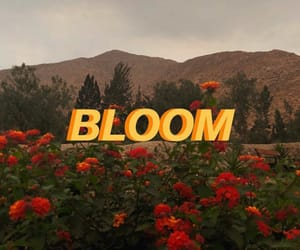 90s, aesthetic, and bloom image