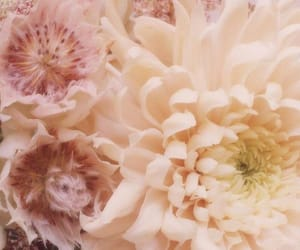 fashion, flower, and pretty image