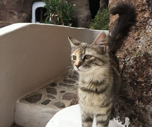 animal, cat, and lanzarote image