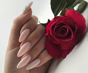 nails, rose, and nail polish image