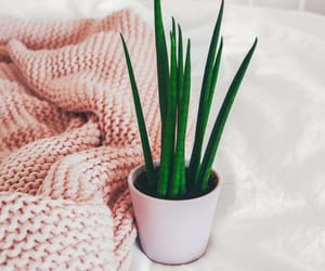 blanket, cactus, and clean image