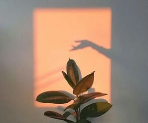 plants, shadow, and aesthetic image