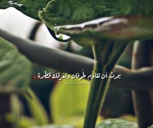 اشجار, اخضر, and العربيه image