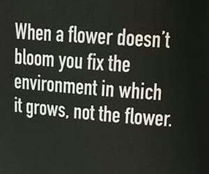 about, flowers, and life image