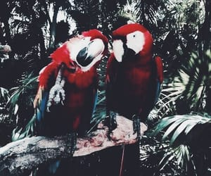 animals, exotic, and birds image