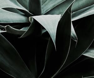 plants, nature, and theme image