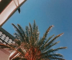 cool, Las Vegas, and palm trees image