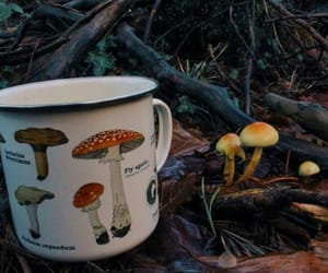 autumn, mushroom, and forest image